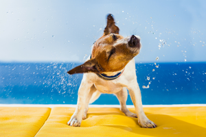DIY Dog Bathing Tips