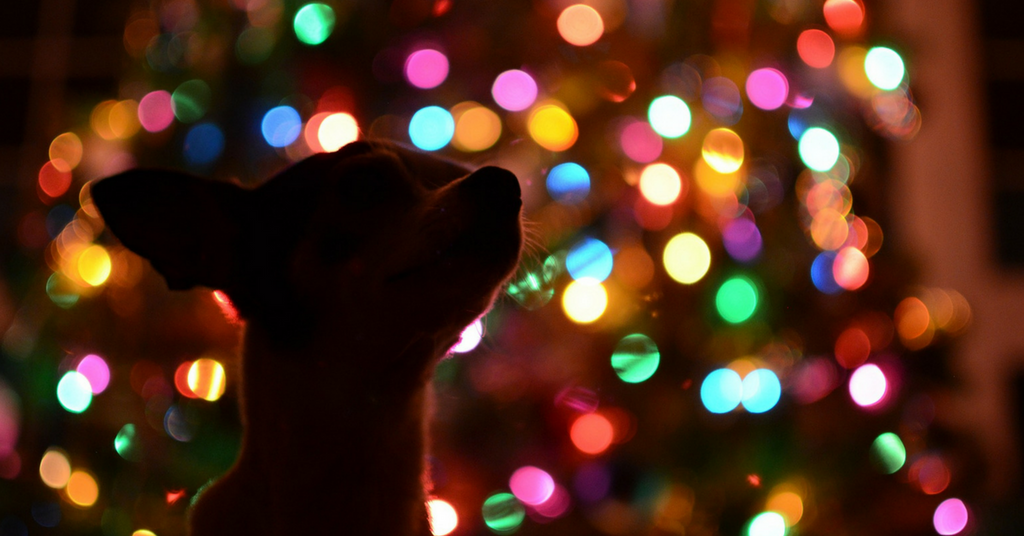 Helpful Holiday Safety Tips for Pet Owners