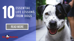 10 Essential Life Lessons from Dogs