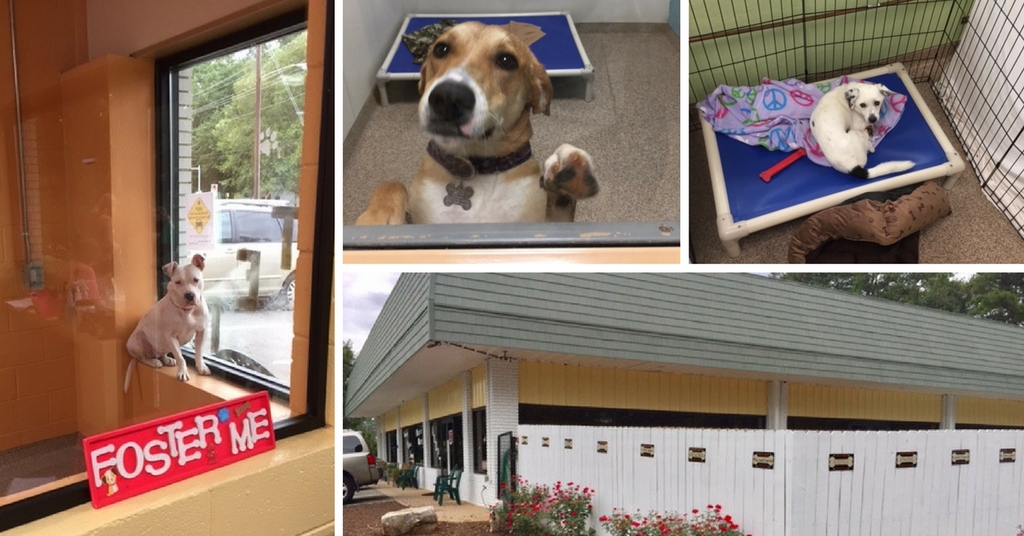 Behind the Scenes at Mostly Mutts Animal Rescue