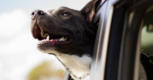 Movers for Mutts: Supporting Animal Shelters with Two Men and a Truck®