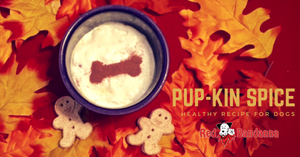 Healthy Pup-kin Spice Latte Recipe for Dogs