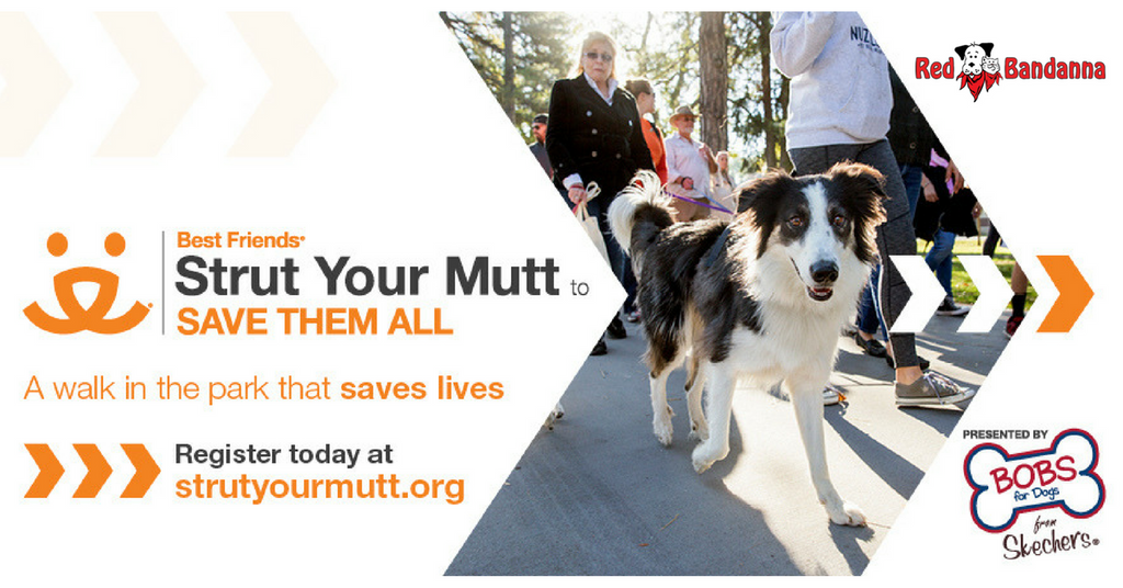 Help Us Save Them All at Strut Your Mutt Atlanta!