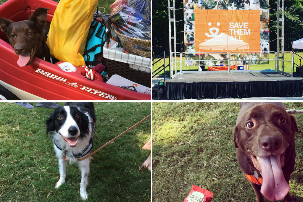 Helping Homeless Pets: Strut Your Mutt Atlanta 2017