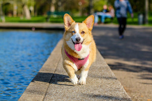 Off the Leash and OTP: Top Dog Parks in North Atlanta Suburbs