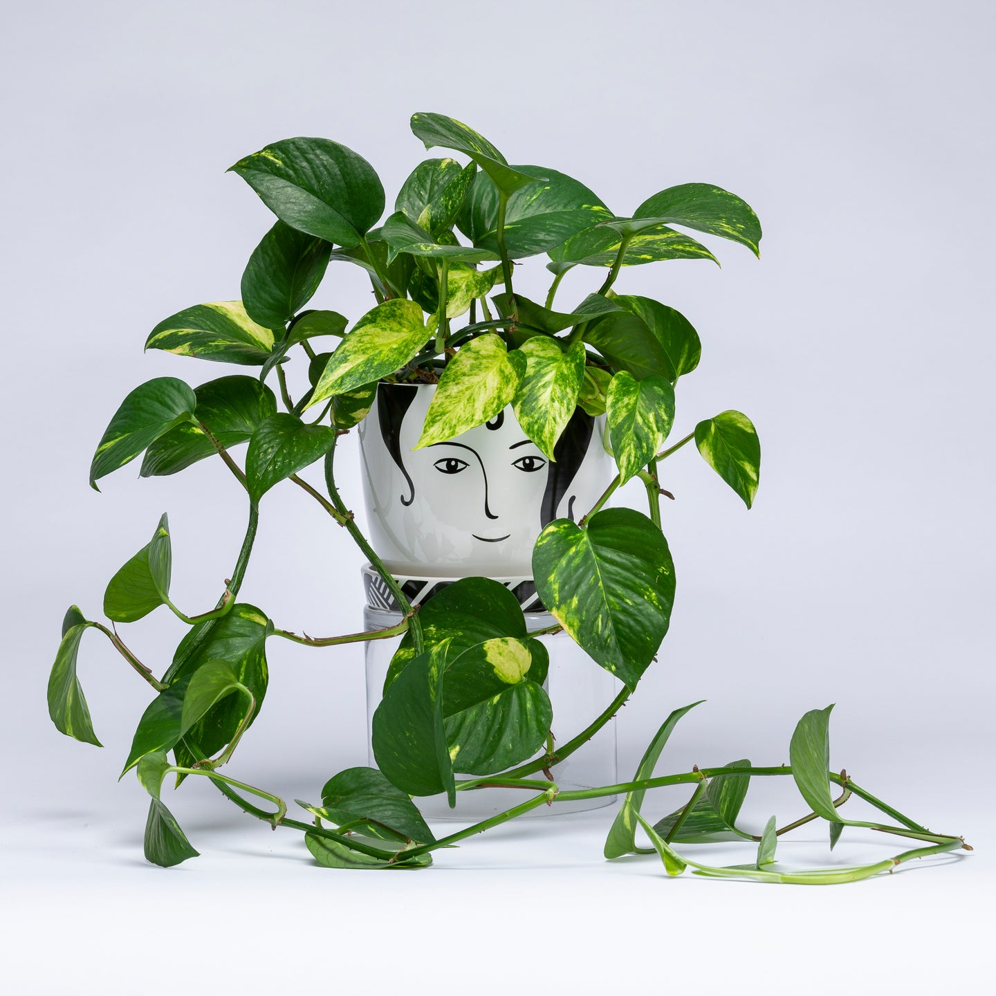 Face Planter with Vine