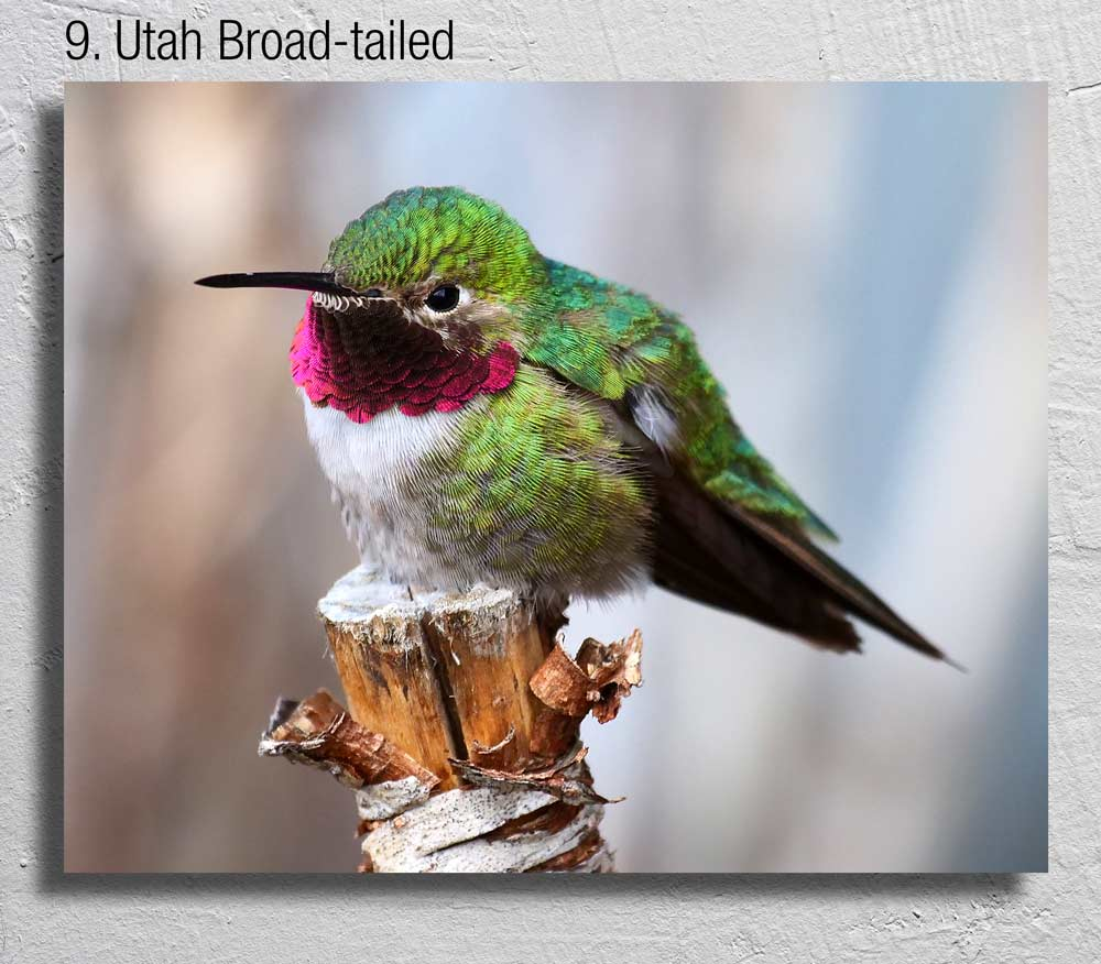 """The Hummingbird Photographer"""