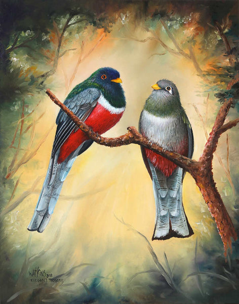 Elegant Trogons Original Oils