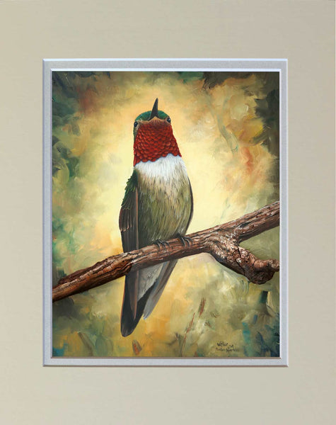 """Mountain Broad-Tailed"" Matted Print"