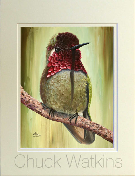 Sir Galahad the Male Anna's Hummingbird.