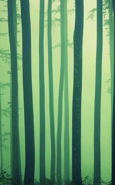 Foggy Forest • Whimsical Woodland Backdrop