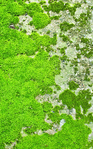 Moss Floor Backdrop • Whimsical Woodland Backdrop