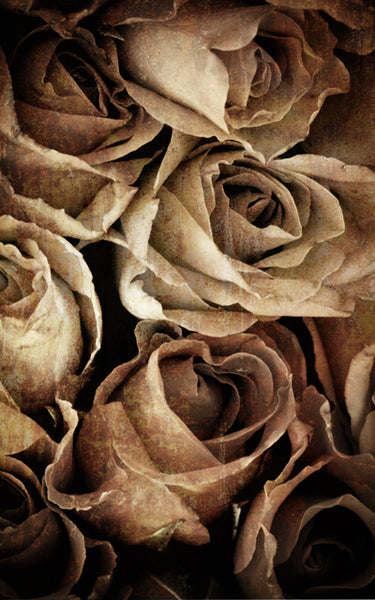 Rose Weathered Grey • Floral Backdrops