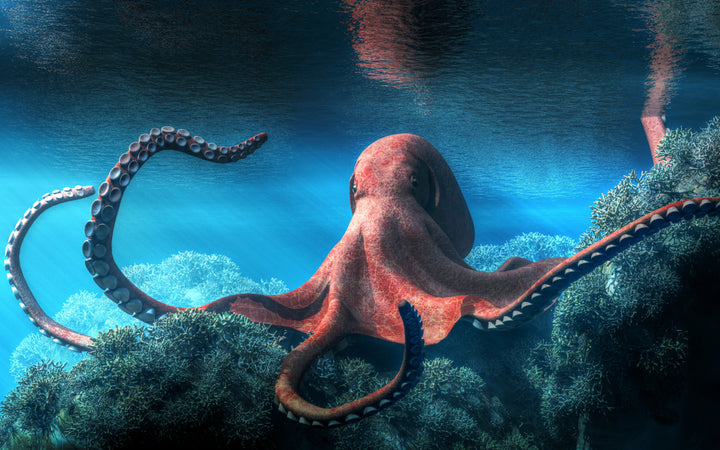 Large red octopus illustration