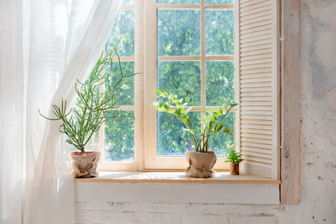 Window Sill Potted Plants