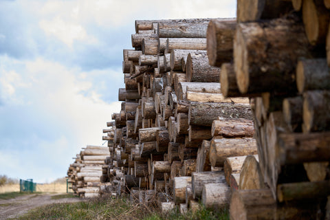 Rows of tree logs waiting to be processed