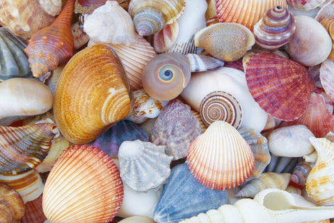 Different colored and shaped seashells washed up on a sandy beach, an alternative before toilet paper was invented
