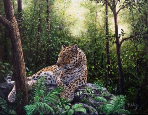 Leopard in a Jungle