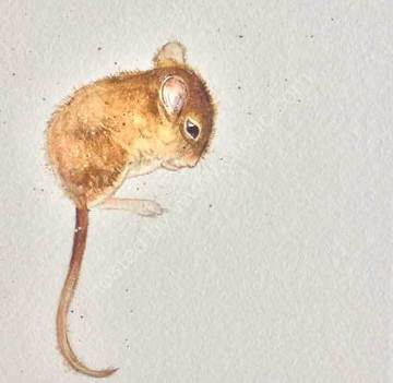 Ida Woodmouse