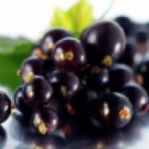 BLACK CURRANT - FW-FLAVOURINGS-Infinite Vaper