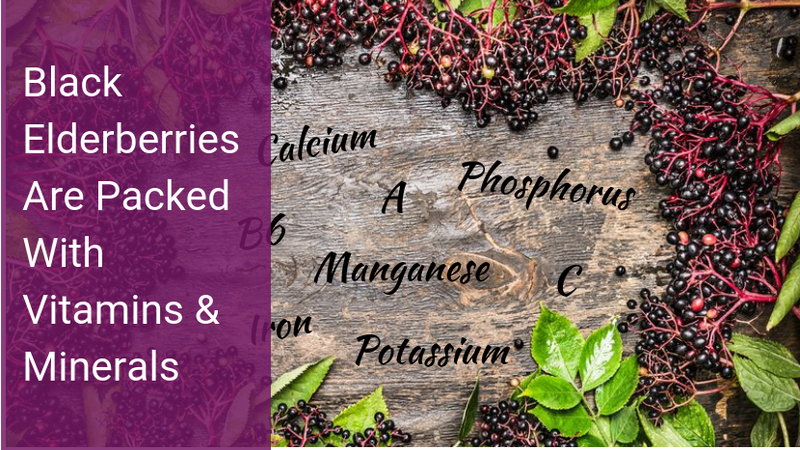 Black Elderberries are Packed with Vitamins & Minerals