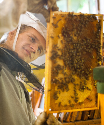 Bee keeper getting local, raw honey from hive