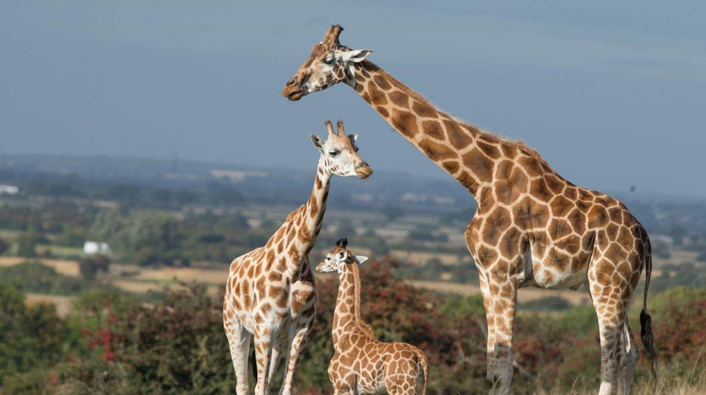 Wildlife Safari Photography Courses at Port Lympne Reserve