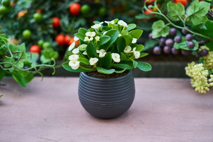 These are the best houseplants for 2020