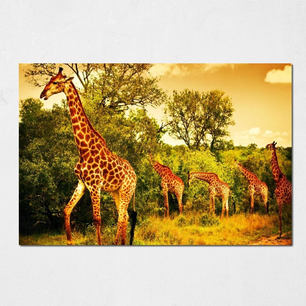 Giraffes in Kruger National Park Small Canvas