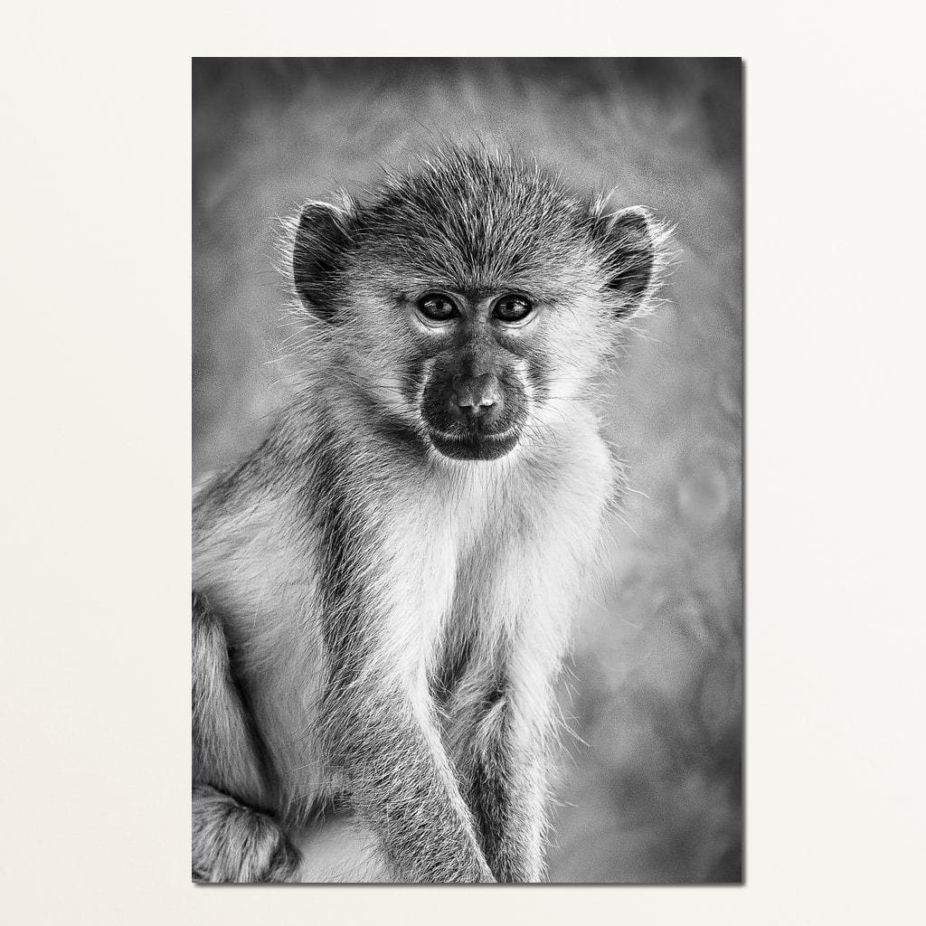 Monkey in Black & White - NicheCanvas