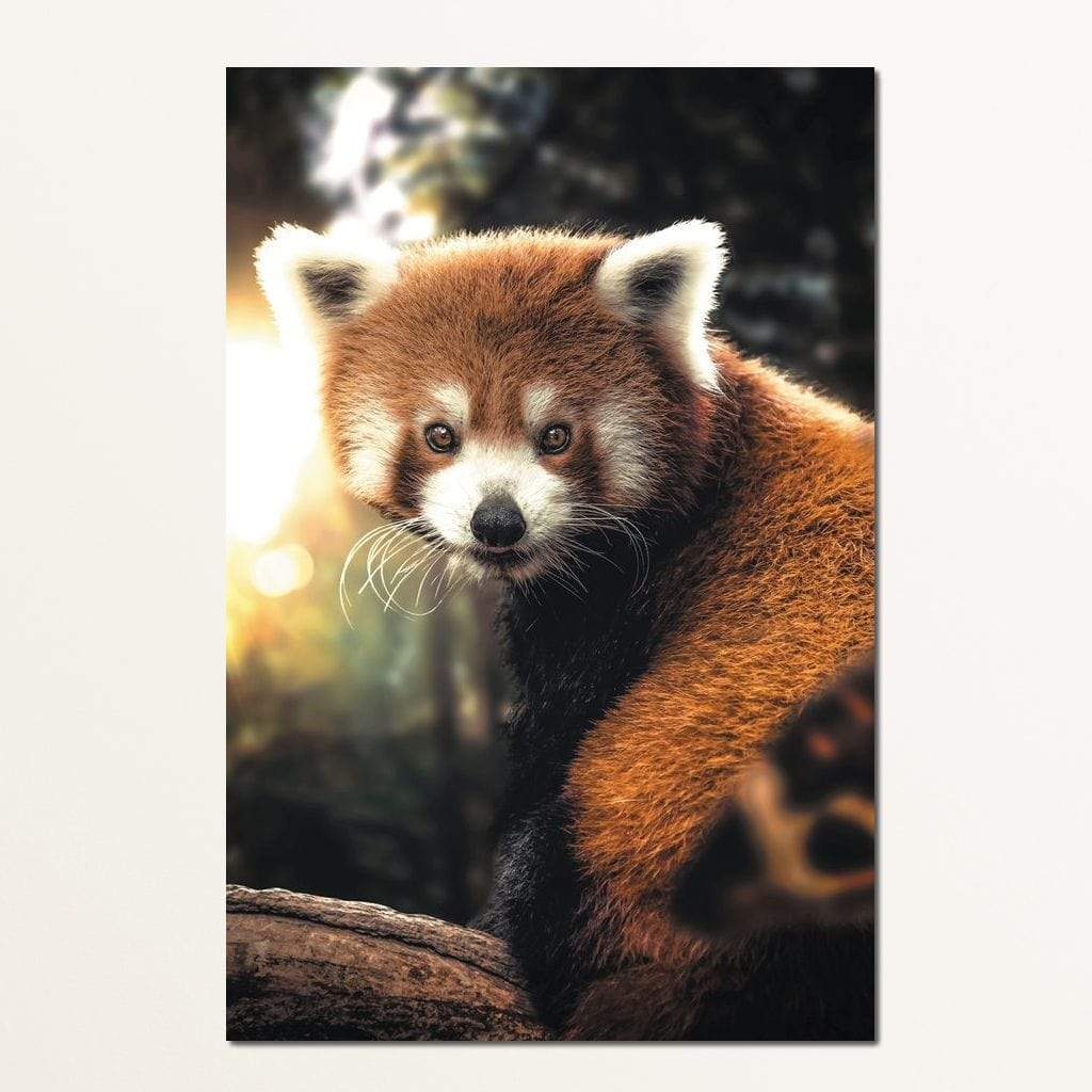 Red Panda - Zenzdesign Multi Panel Canvas Wall Art - NicheCanvas