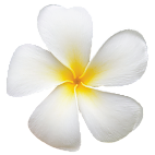 FRANGIPANI - The delicious flowers