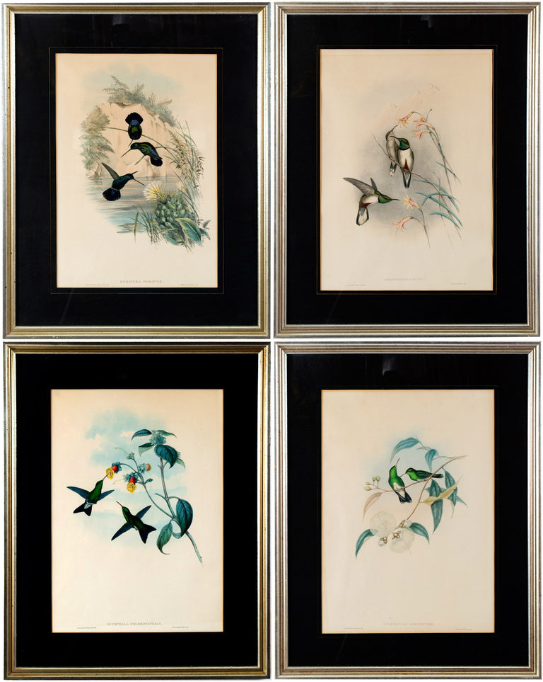 A Set of Four Hand-Colored Lithographs of Birds