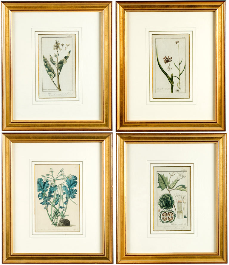 A set of four English hand-colored floral etchings