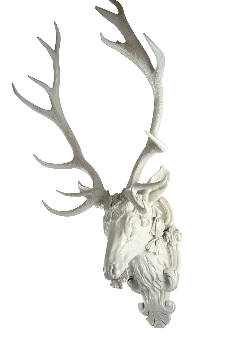 European Red Deer Stag Head