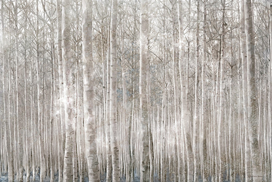 Bluebird Barn BLUE456 - BLUE456 - Birch Trees     - 18x12 Photography, Birch Trees, Forest from Penny Lane