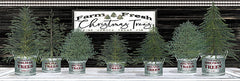 CIN1765 - Galvanized Pots Christmas Trees I - 18x6