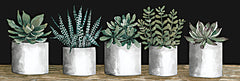 CIN2329A - Succulent Row   - 36x12