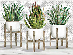CIN2734 - Succulent Trio on Stands - 16x12