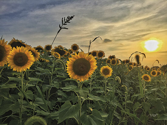 Donnie Quillen DQ100 - Midwest Livin' I - Sunflower, Field, Sun from Penny Lane Publishing