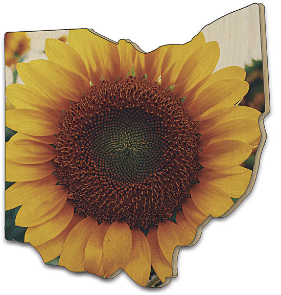 Donnie Quillen DQ101OH - Midwest Livin' II - Sunflower, Landscape, Photography, Wood Cutout from Penny Lane Publishing