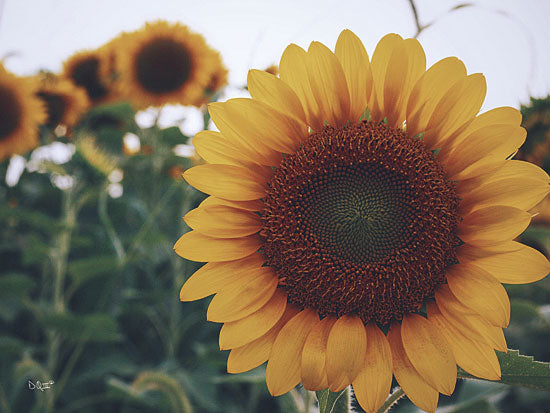 Donnie Quillen DQ101 - Midwest Livin' II - Sunflower, Field from Penny Lane Publishing