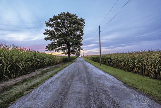 Donnie Quillen DQ113 - A Summer Sunset II - Tree, Path, Corn, Road from Penny Lane Publishing