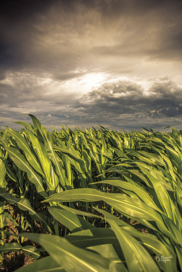 Donnie Quillen DQ130 - Field of Corn - Field, Corn, Farm, Storm from Penny Lane Publishing