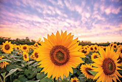 DQ187 - Sunflower Sunset - 18x12