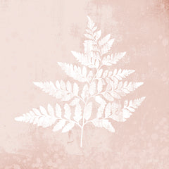 FEN149 - Blush Fern I - 12x12