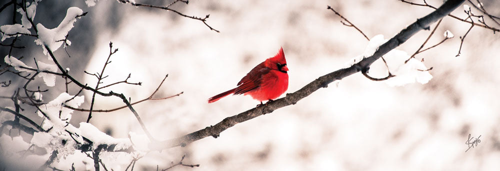 Justin Spivey JDS187 - Cardinal III  - Cardinal, Snow, Branch, Tree from Penny Lane Publishing