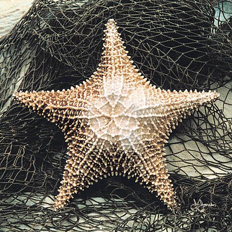 John Jones JJAR199 - Starfish in Net - Shell, Starfish from Penny Lane Publishing
