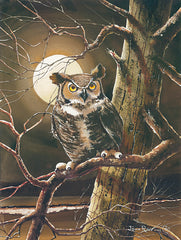 JR364 - The Night Owl - 12x16