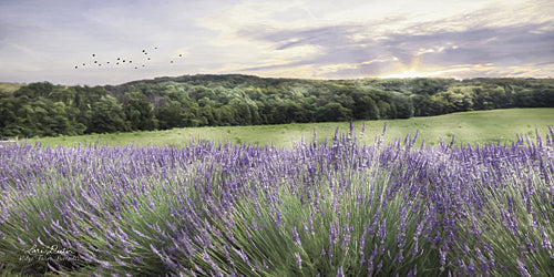 Lori Deiter LD1046 - Lavender Fields - Lavender, Fields, Landscape from Penny Lane Publishing